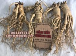 Sâm củ tươi Hàn Quốc 4 củ 1 kg - Sâm trên 6 năm