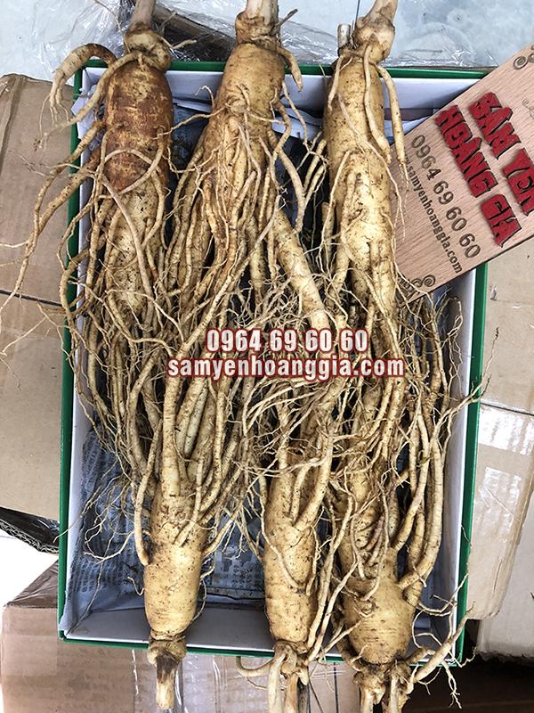 Sâm củ tươi Hàn Quốc 6 củ 1 kg - Sâm trên 6 năm