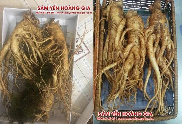 Sâm tươi Hàn Quốc 3 củ 1 kg
