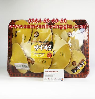 Nấm linh chi đỏ núi đá Hàn Quốc dạng khay cao cấp làm quà tặng